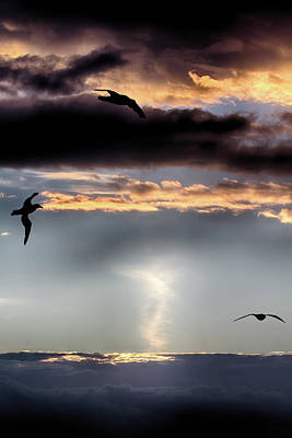 Photograph - Sunset With The Albatross by John Haldane