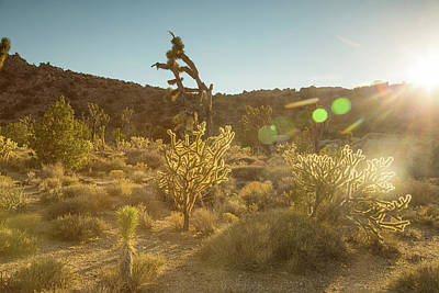 Photograph - Sunset With The Cholla by Kunal Mehra