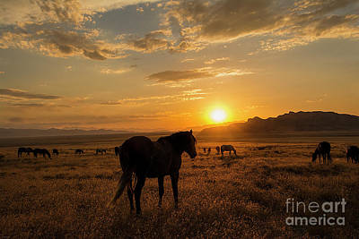 Photograph - Sunset With The Mustangs  by Nicole Markmann Nelson
