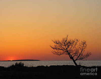 Photograph - Sunset With Tree by Patricia Januszkiewicz