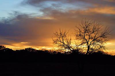 Sunset With Tree Silhouette Original