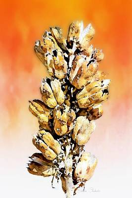 Las Cruces Painting - Sunset Yucca Pods by Barbara Chichester