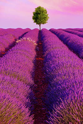 France Provence Photograph - Sunsets Are Purple by Iryna Goodall