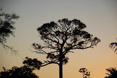 Rusty Trucks - Sunsetting Thru The Trees by Rob Hans