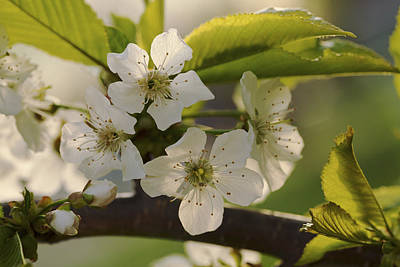 Photograph - Sunshine And Flowers by Jane Eleanor Nicholas