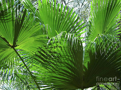 Photograph - Sunshine And Palm Leaves  by D Hackett