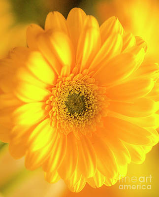 Photograph - Sunshine by Cathy Donohoue