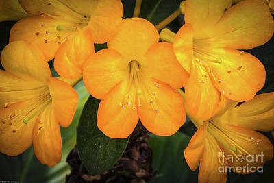 Photograph - Sunshine Flowers by Mitch Shindelbower
