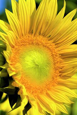 Photograph - Sunshine Gold by Kathy Clark