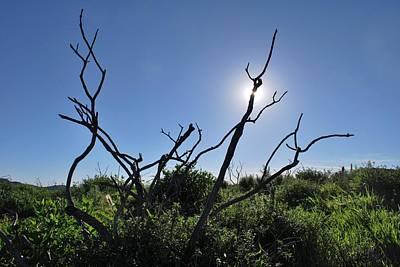 Photograph - Sunshine In Fields Through Branches by Matt Harang