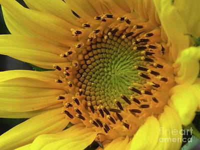 Studio Grafika Typography - Sunshine In The Form A Flower - Sunflower by Cindy Treger