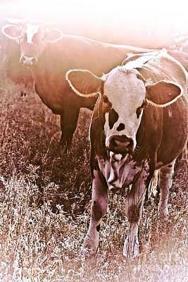 Photograph - Sunshine In The Pasture by Kim Henderson