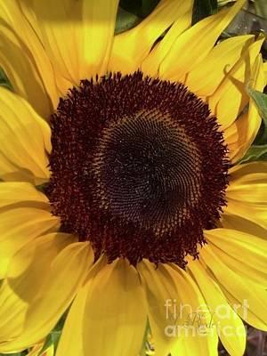 Photograph - Sunshine by Jeannie Rhode