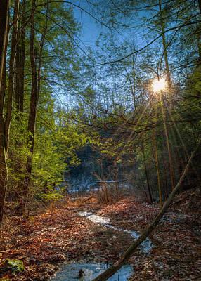 Photograph - Sunshine by Lena Auxier
