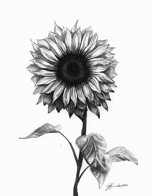 Pencil Drawing Drawing - Sunshine Love by J Ferwerda