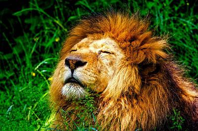 Sunshine Loving Lion Art Print by Pixabay