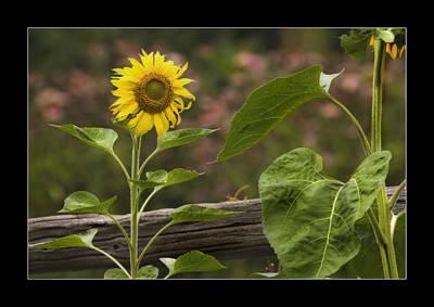 Photograph - Sunshine by Michel Legare