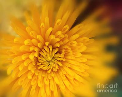 Photograph - Sunshine Mum by Kathy M Krause