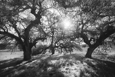 Photograph - Sunshine Oaks by Alexander Kunz