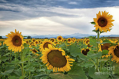 Photograph - Sunshine On A Cloudy Day by Jim Garrison