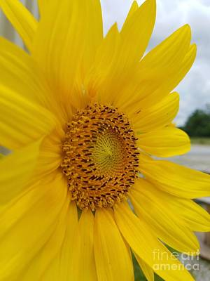 Photograph - Sunshine On A Cloudy Day by Maria Urso