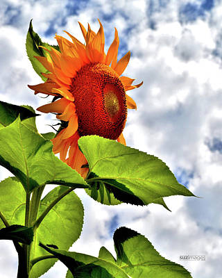 Photograph - Sunshine On A Cloudy Day by Susie Loechler