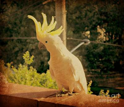 Cockatoo Mixed Media - Sunshine On My Shoulder by Leanne Seymour