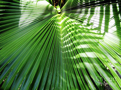 Photograph - Sunshine On The Palm Frond by D Hackett