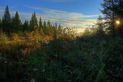 Autumn Pies - Sunshine on the Tamaracks by Dale Kauzlaric