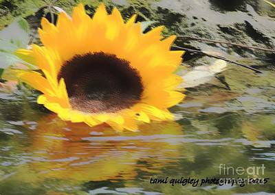 Photograph - Sunshine On The Water by Tami Quigley