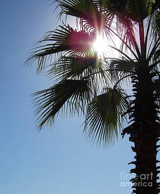 Photograph - Sunshine Palm by D Hackett
