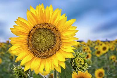 Photograph - Sunshine by Peg Runyan