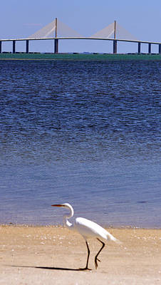Photograph - Sunshine Skyway Bridge With White Egret by Rose  Hill