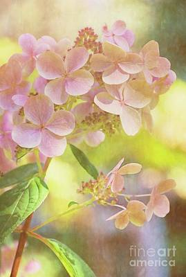 Photograph - Sunshine Soft by Peggy Hughes