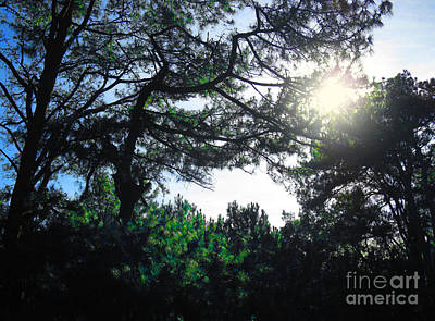 Photograph - Sunshine Through The Trees Looks So Lovely by Christopher Shellhammer