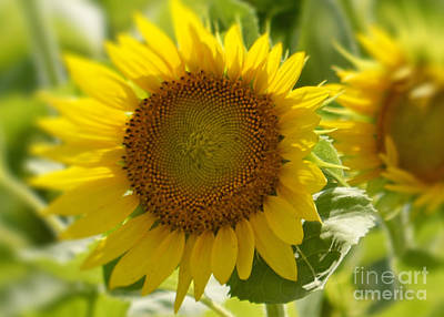 Photograph - Sunshine  by Traci Cottingham
