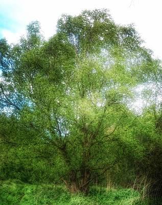 Photograph - Sunshine Tree by YoursByShores Isabella Shores