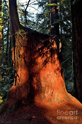 Photograph - Sunshine Tree Stump by Terry Elniski