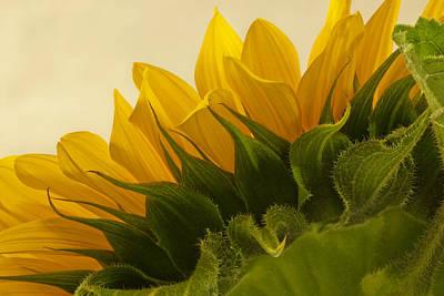 Sunshine Under The Petals Art Print