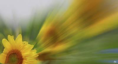 Photograph - Sunshine by Wayne King