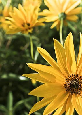 Photograph - Sunshine Yellow by Nora Blansett