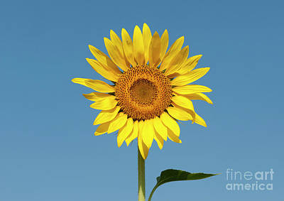Photograph - Sunshine Yellow by Tim Gainey