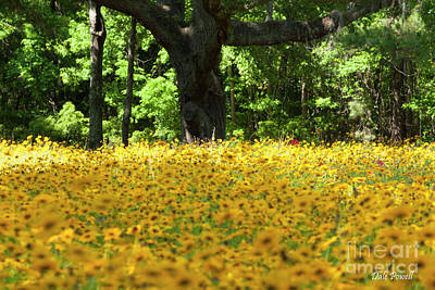 Photograph - Sunshine Yellow Trunk  by Dale Powell
