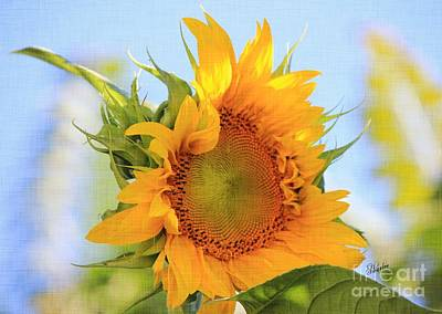 Floral Photograph - Sunshiney Day  by Sharon Johnston