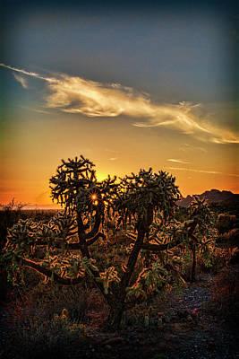 Photograph - Sunstar Cholla Sunset  by Saija Lehtonen