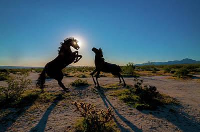 Photograph - Sunstar Eye by Ralph Vazquez