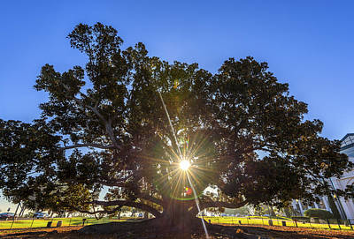 Office Gift Photograph - Sunstar by Joseph S Giacalone