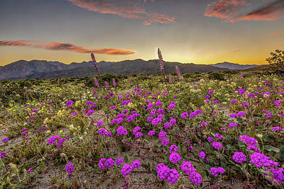 Art Print featuring the photograph Super Bloom Sunset by Peter Tellone