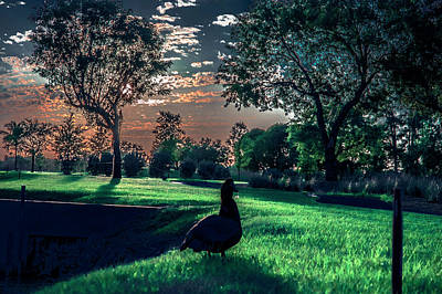 Green Photograph - Super Duck by Michael Frizzell