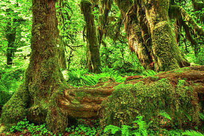 Photograph - Super Green Rainforest by Spencer McDonald